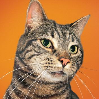 DAPZWD-dierenartsen-meppel_sqaure_kat