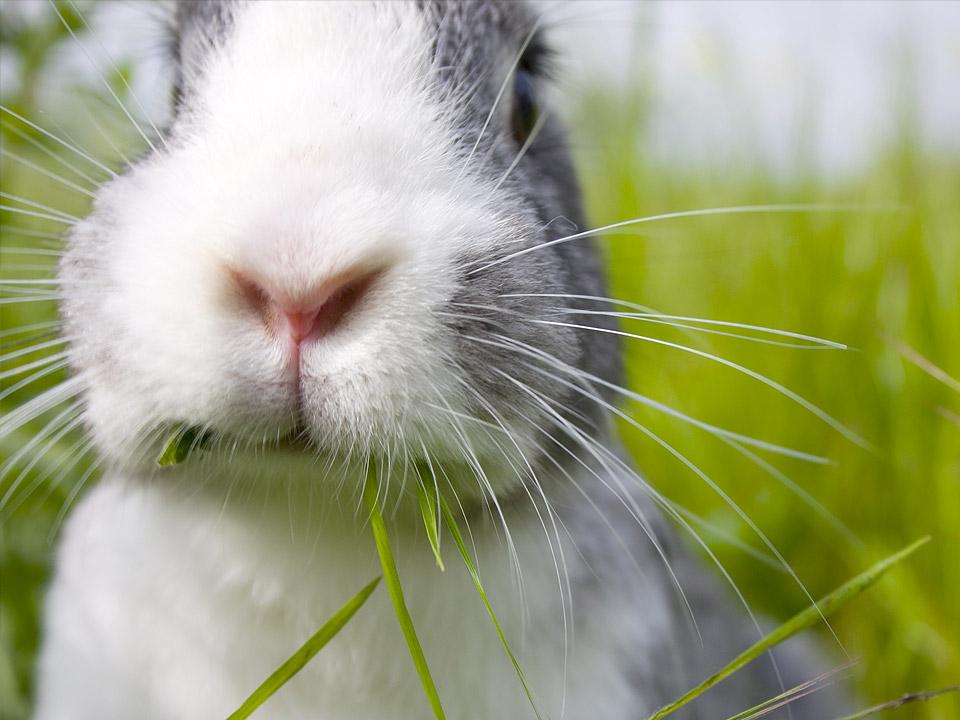 DAPZWD_dierenartsenpraktijk-meppel_content-konijn-neus