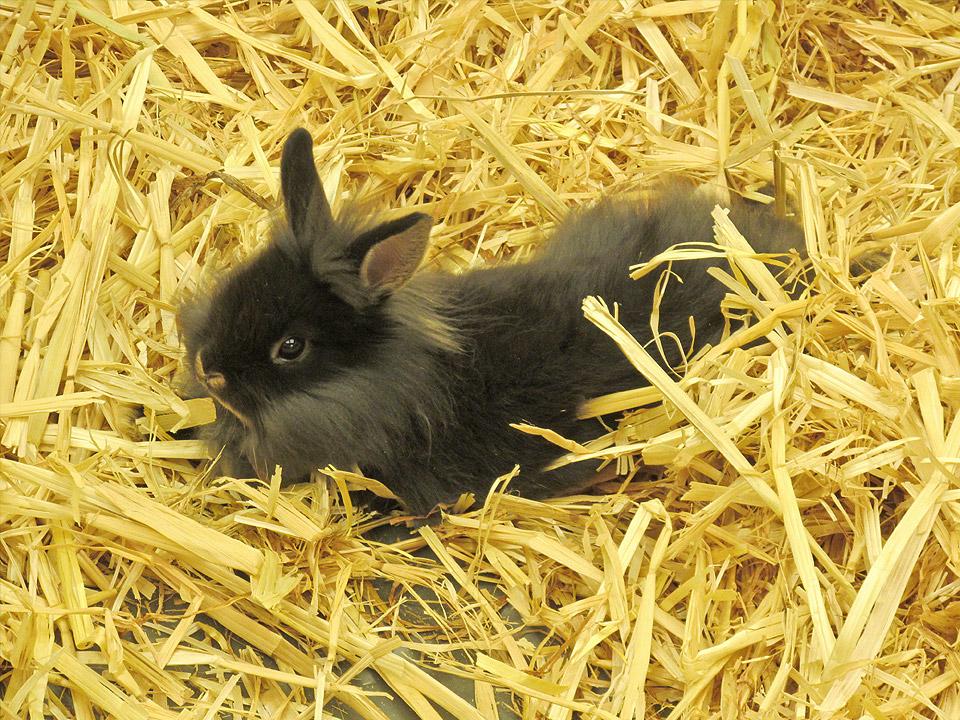 DAPZWD_dierenartsenpraktijk-meppel_content-konijn-stro
