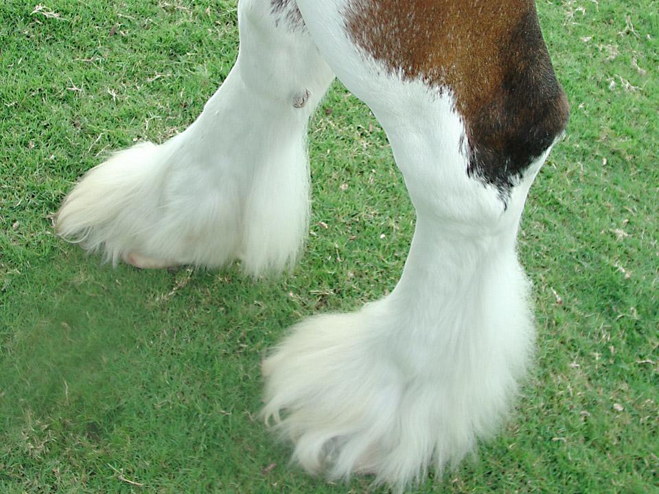 DAPZWD_dierenartsenpraktijk-meppel_content-paarden-benen