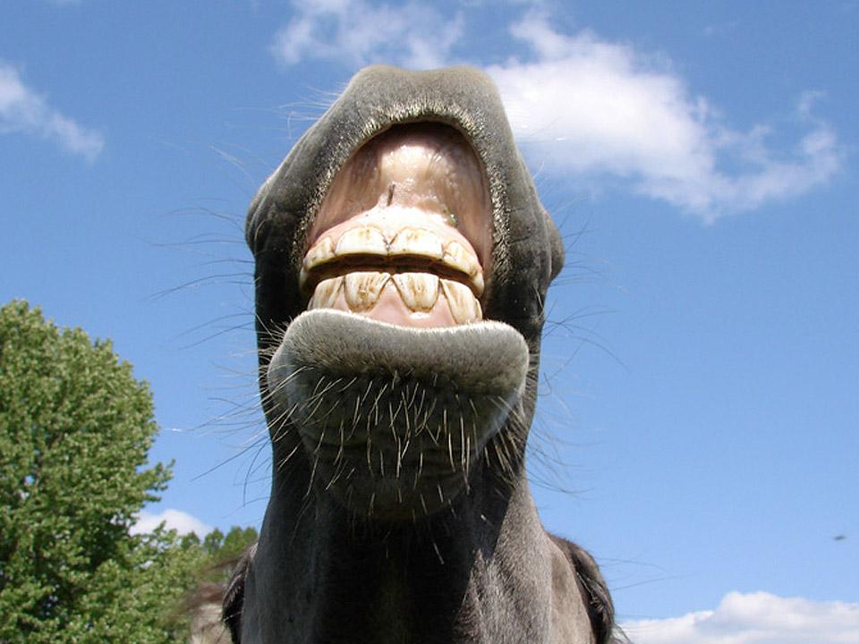 DAPZWD_dierenartsenpraktijk-meppel_content-paarden-gebit