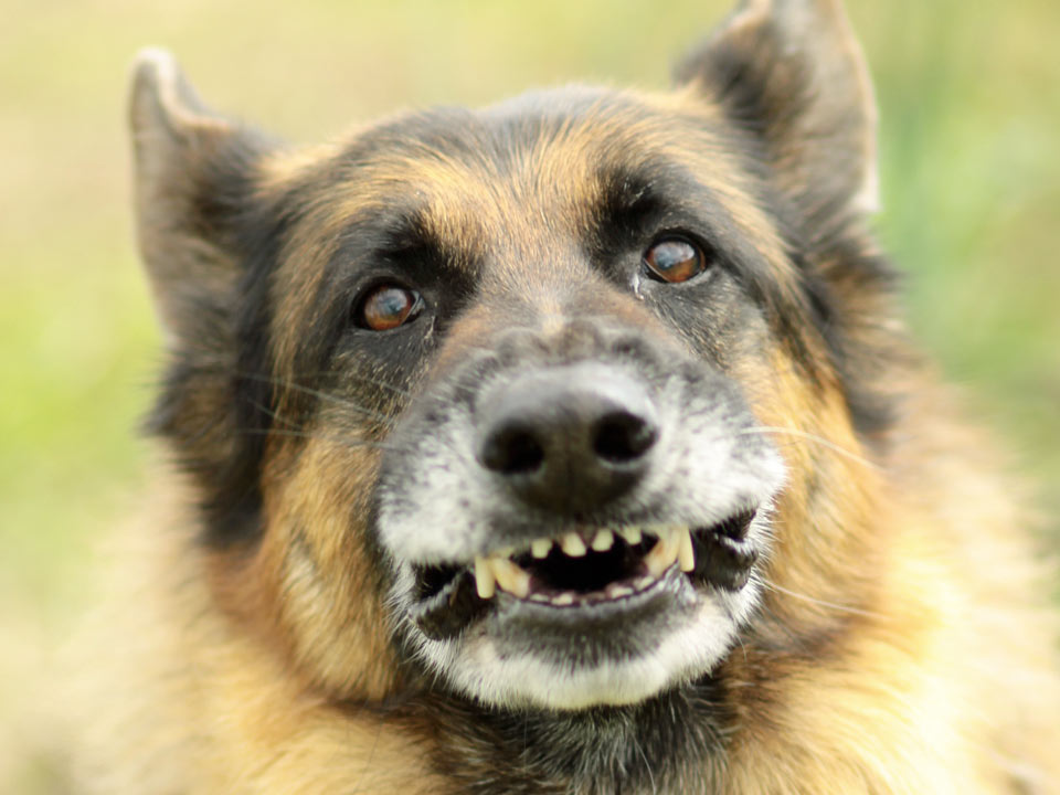 DAPZWD_dierenartsenpraktijk-zuidwest-drenthe_content_gebit-hond