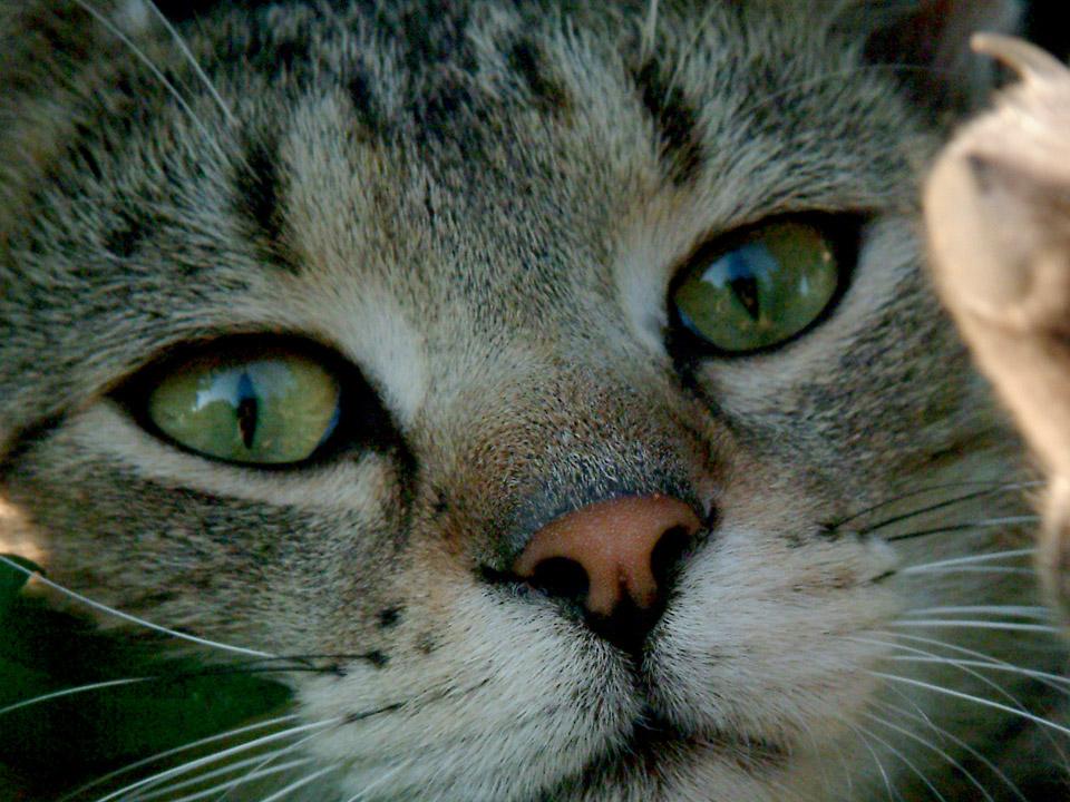 DAPZWD_dierenartsenpraktijk-zuidwest-drenthe_kat-01