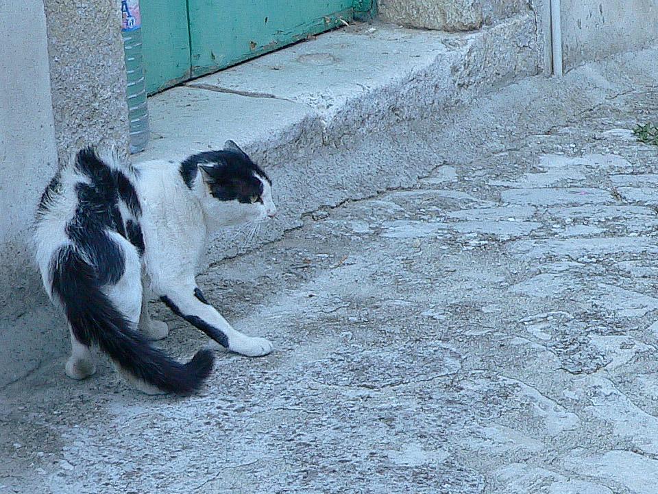 DAPZWD_dierenartsenpraktijk-zuidwest-drenthe_kat-vechten