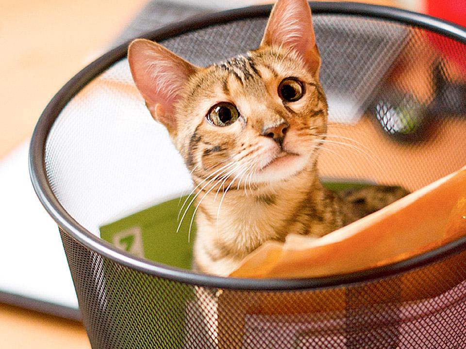 DAPZWD_dierenartsenpraktijk-zuidwest-drenthe_kat-vragen