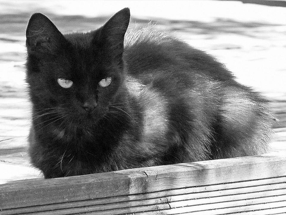DAPZWD_dierenartsenpraktijk-zuidwest-drenthe_kitten-02