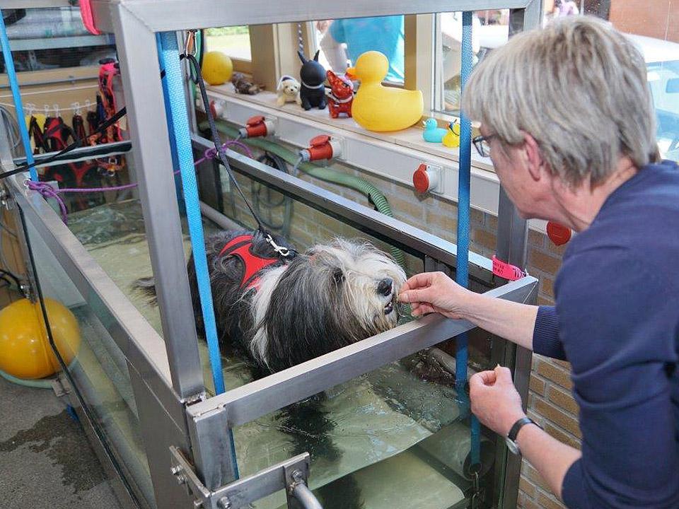 DAPZWD_dierenartsenpraktijk-meppel_content-dieren-fysiotherapie-water