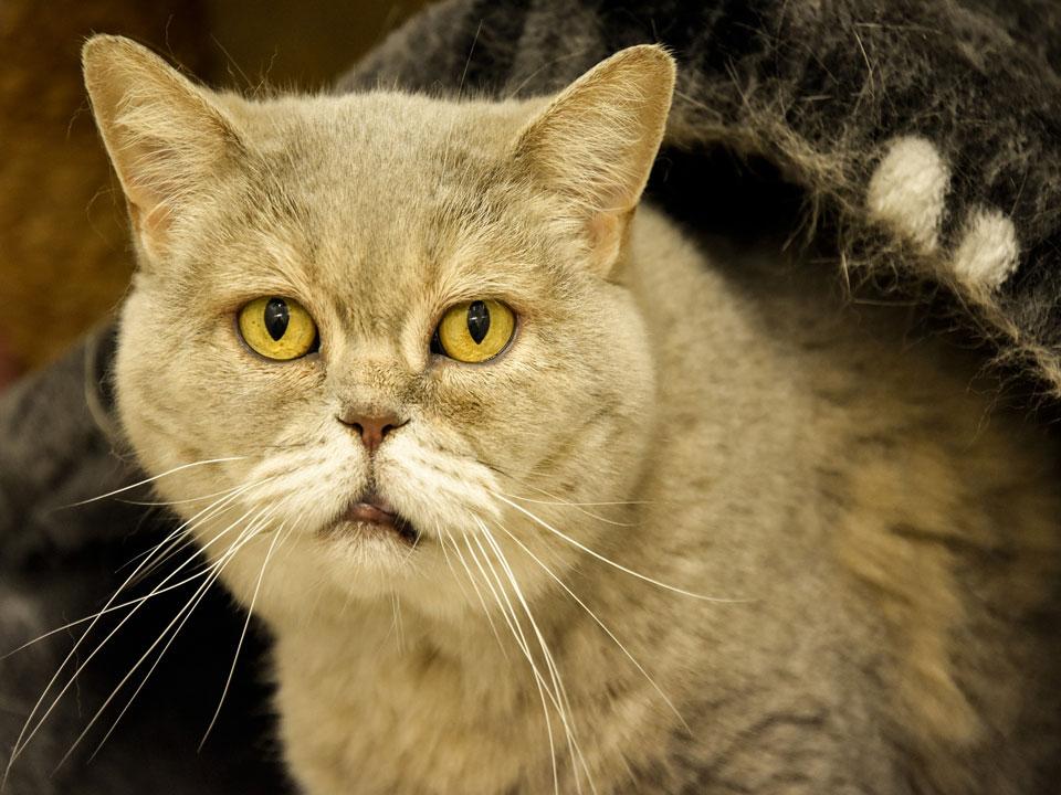 oude kat slechte vacht dierenarts meppel